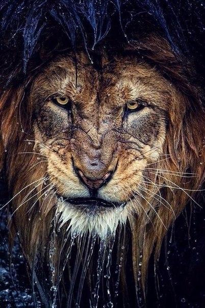Фото львов